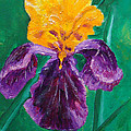 German Iris by Marney Smithies
