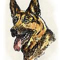 German-shepherd-portrait by Gordon Punt