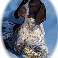 German Shorthaired Pointer 790 by Larry Matthews
