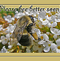 Get Well Card - Bumblebee by Mother Nature