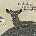 Get Well Card - Whitetail Deer In Velvet by Mother Nature