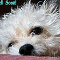 Get Well Soon - Dog by Sarah Broadmeadow-Thomas