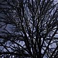 Ghost Tree by Scott Wood