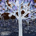 Ghostly Joshua Tree by Claire Plowman