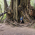 Giant Cedar by Wayne  Johnson