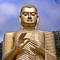 Giant Gold Bhudda by Jane Rix