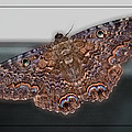 Giant Moth by DigiArt Diaries by Vicky B Fuller