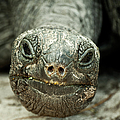 Giant Tortoise Close Up by sisifo73photography by Marco Romani