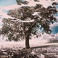 Giant Tree In City by Hag