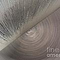 Giant's Eye by Ausra Huntington nee Paulauskaite