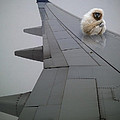 Gibbon On Wing by Tim Nyberg