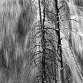 Gibbons Falls In Yellowstone National Park by Randall Nyhof