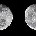 Gibbous Moon by Betsy Knapp