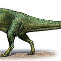 Giganotosaurus Carolinii, A Prehistoric by Sergey Krasovskiy