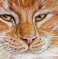 Ginger Cat  by Svetlana Ledneva-Schukina