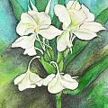 Ginger Lilies by Carla Parris