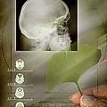 Ginkgo In Medicine by Miriam Maslo