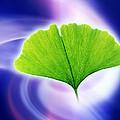Ginkgo Leaf by Pasieka