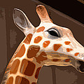 Giraffe by Bill Owen
