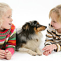 Girls And Shetland Sheepdog by Mark Taylor