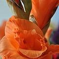 Gladiola Blooms by Teresa Blanton