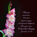 Gladiola Jeremiah 15 16 by Randall Branham