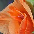 Gladiola by Teresa Blanton