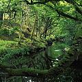 Glengarriff River, County Cork, Ireland by Richard Cummins