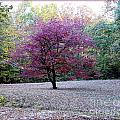 Glenna's Dogwood In The Fall by Tisha Clinkenbeard