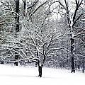 Glenna's Dogwood In The Snow by Tisha Clinkenbeard