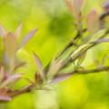 Glimpse Of Spring by Heidi Smith