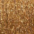 Glistening Gold Prairie Grass Abstract by Kathy Clark