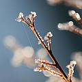 Glistening Ice Crystals by Kathy Clark