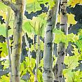 Glittering Poplars by Mohamed Hirji