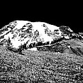Glorious Mount Rainier  by David Patterson