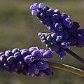 Glorious Purple by Cindy Stewart