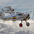 Gloster Gladiator by Pat Speirs
