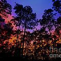 Glowing Forest by Barbara Bowen