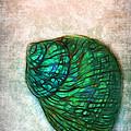 Glowing Seashell by Judi Bagwell