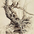 Gnarled Tree Trunk by Thomas Cole