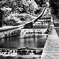 Gnoll Country Park 4 Mono by Steve Purnell