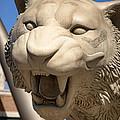 Go Get 'em Tigers by Gordon Dean II