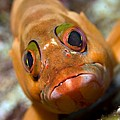 Goby by Louise Murray