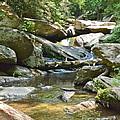 Goforth Falls by Carol  Bradley