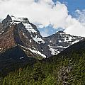 Going To The Sun Mountain Glacier National Park Spring Tree Larry Darnell by Larry Darnell
