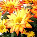 Gold And Red Autumn Mums by Elaine Plesser