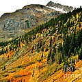 Gold In Colorado by Marilyn Smith