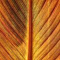 Gold Leaf by Susan Herber