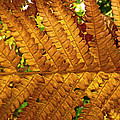 Gold Leaf by William Fields