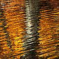 Gold Reflection by Emanuel Tanjala